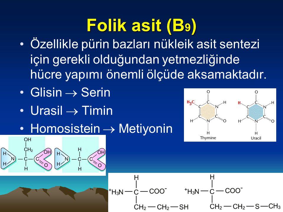 Folik asit (B9) Özellikle pürin bazları nükleik asit sentezi için gerekli olduğundan yetmezliğinde hücre yapımı önemli ölçüde aksamaktadır.