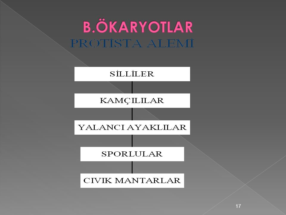 B.ÖKARYOTLAR
