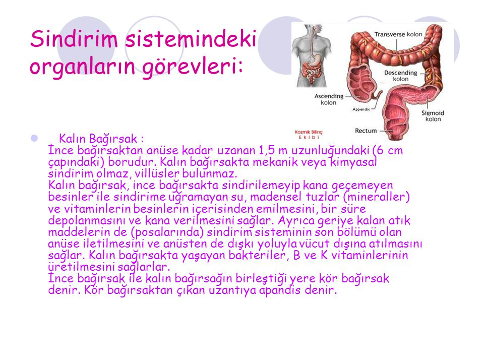 Sindirim sistemindeki organların görevleri: