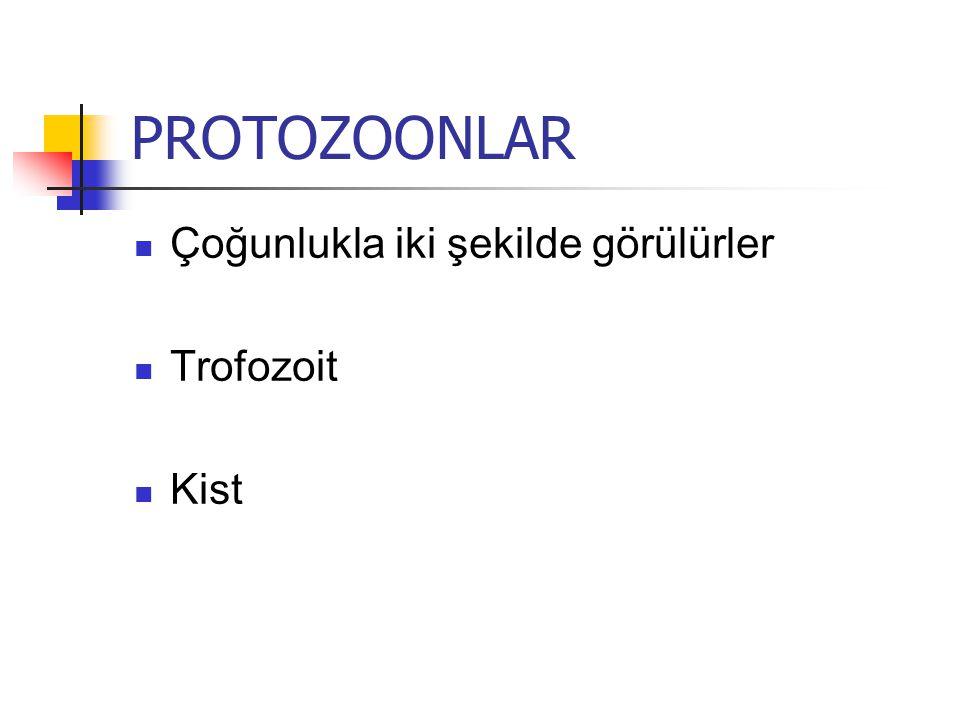 PROTOZOONLAR Çoğunlukla iki şekilde görülürler Trofozoit Kist
