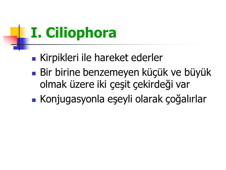 I. Ciliophora Kirpikleri ile hareket ederler