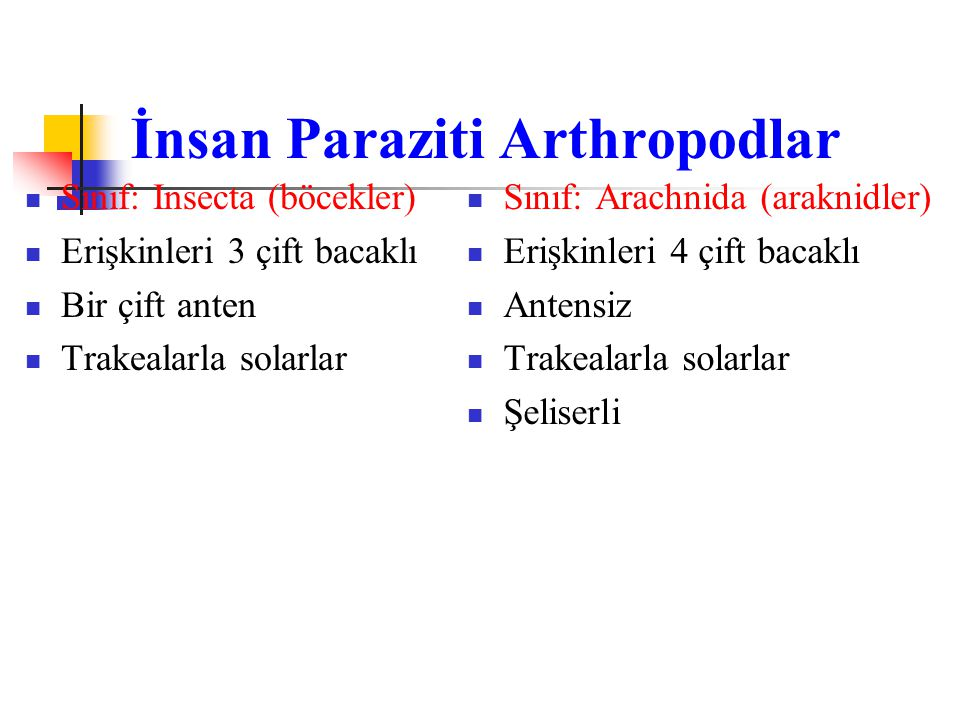 İnsan Paraziti Arthropodlar