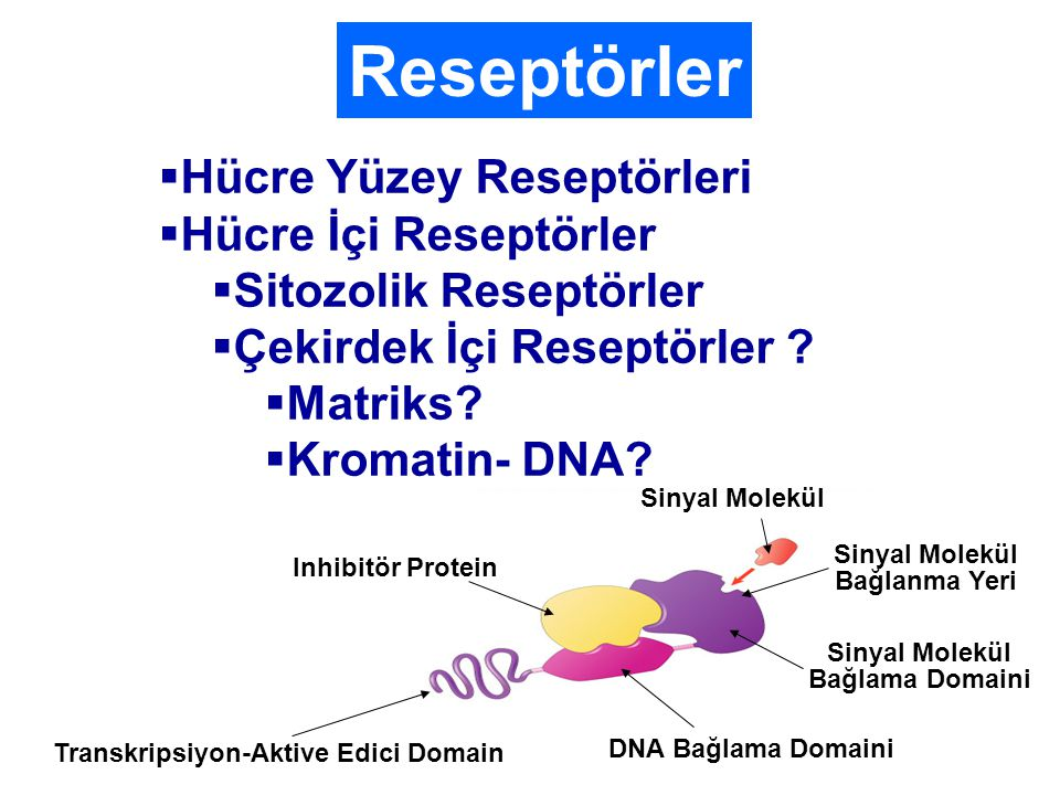 Transkripsiyon-Aktive Edici Domain