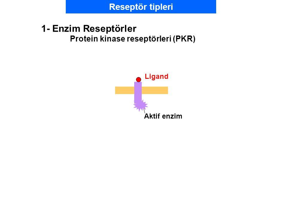 1- Enzim Reseptörler Reseptör tipleri