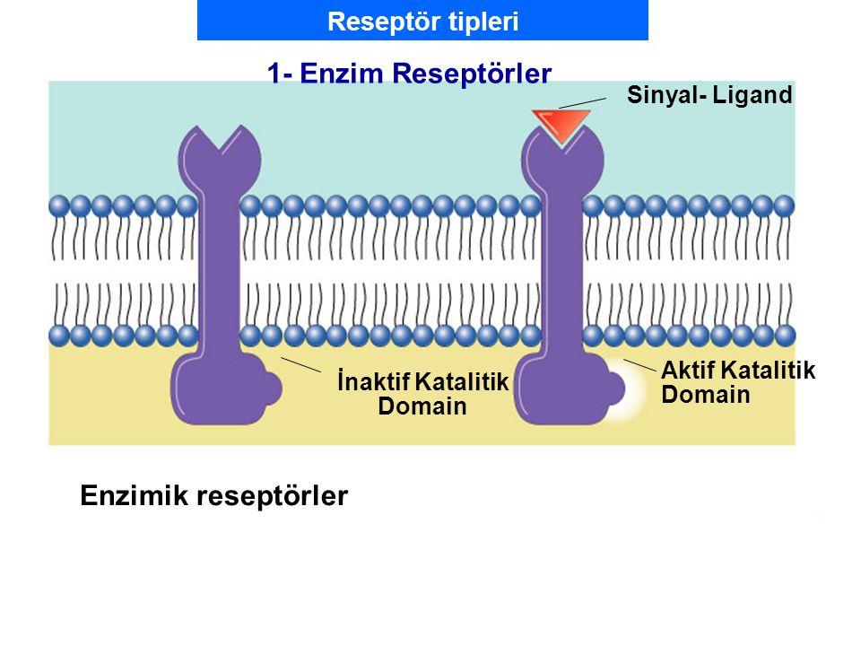 Fig. 7.5b (TEArt) 1- Enzim Reseptörler Enzimik reseptörler