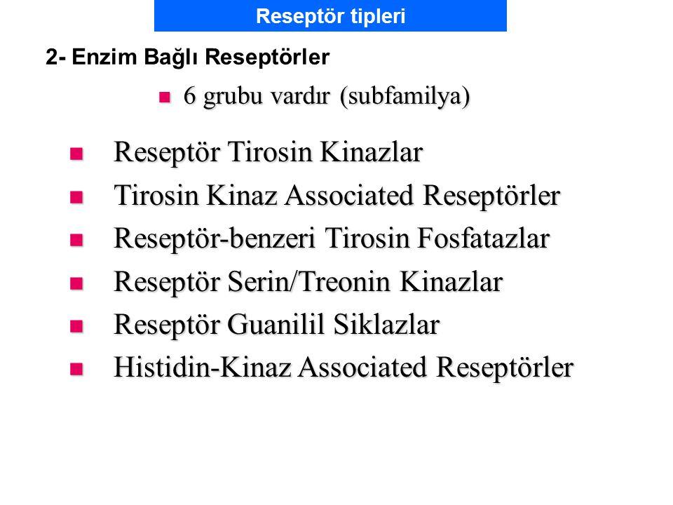 2- Enzim Bağlı Reseptörler