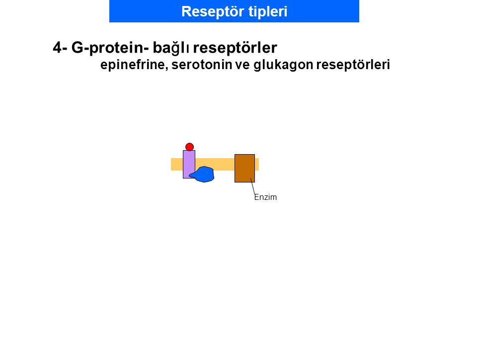 4- G-protein- bağlı reseptörler