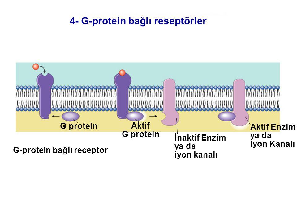 G-protein bağlı receptor