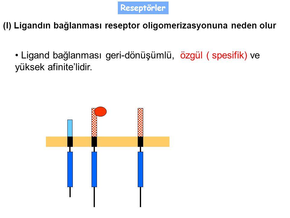 Reseptörler (I) Ligandın bağlanması reseptor oligomerizasyonuna neden olur.