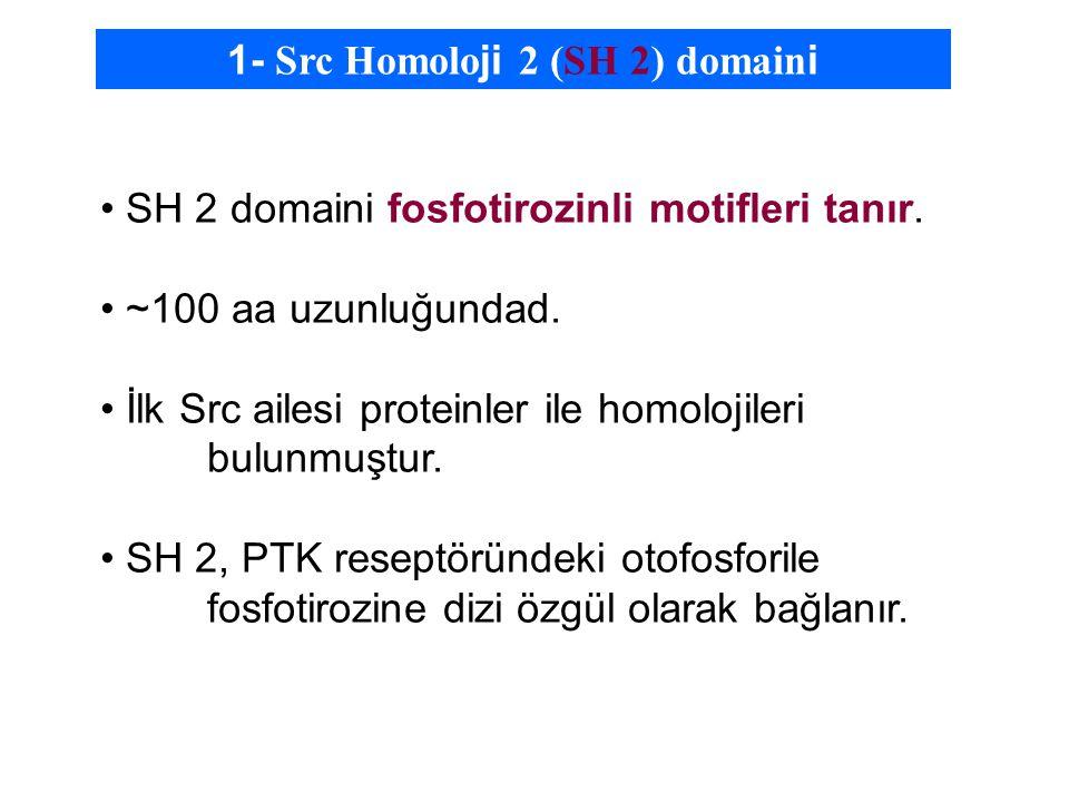 1- Src Homoloji 2 (SH 2) domaini