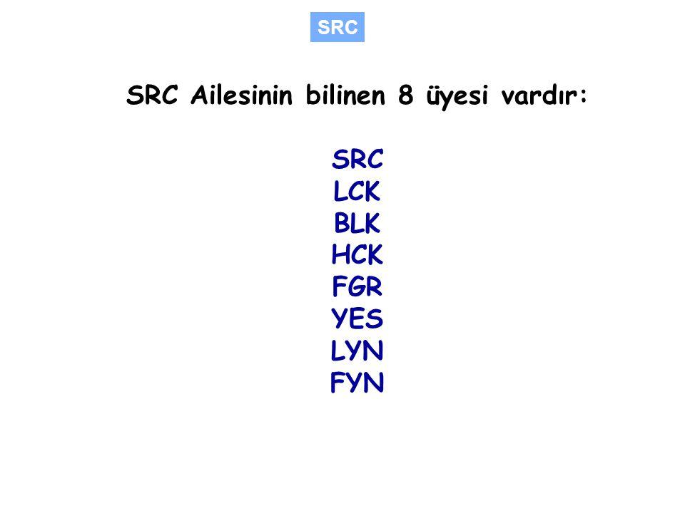 SRC Ailesinin bilinen 8 üyesi vardır: