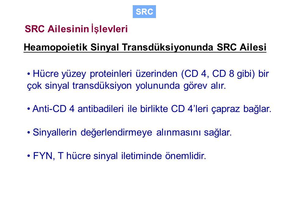 SRC Ailesinin İşlevleri
