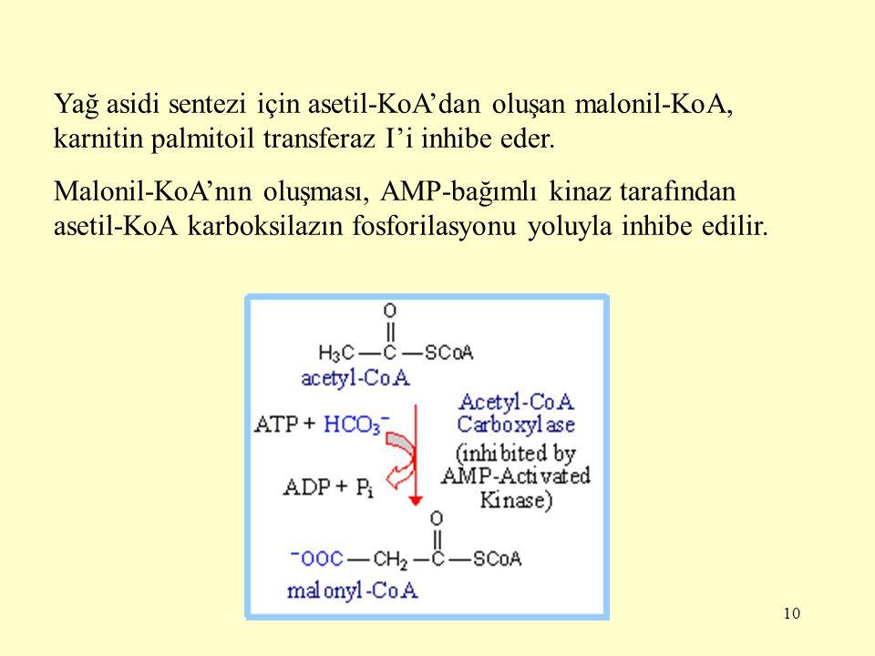 Yağ asidi sentezi için asetil-KoA'dan oluşan malonil-KoA, karnitin palmitoil transferaz I'i inhibe eder.