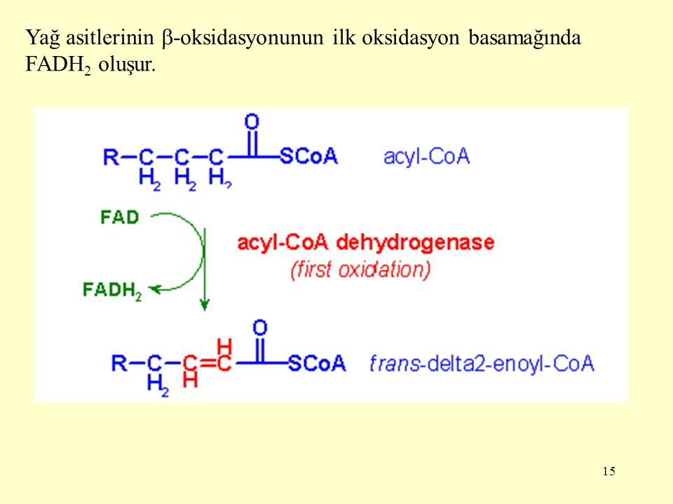 Yağ asitlerinin -oksidasyonunun ilk oksidasyon basamağında FADH2 oluşur.
