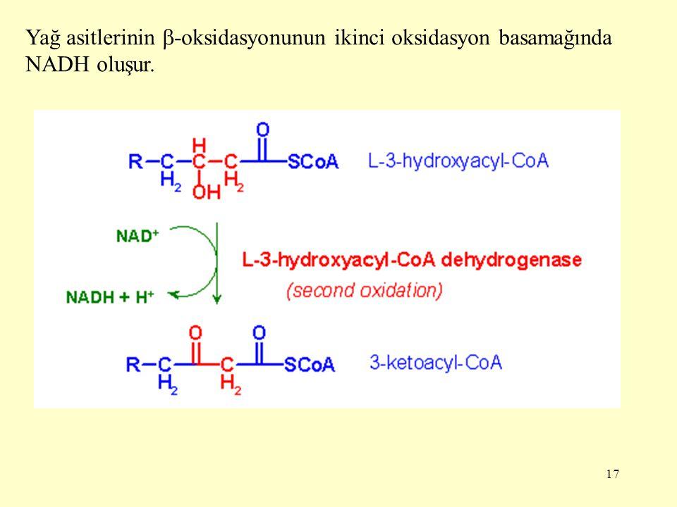 Yağ asitlerinin -oksidasyonunun ikinci oksidasyon basamağında NADH oluşur.