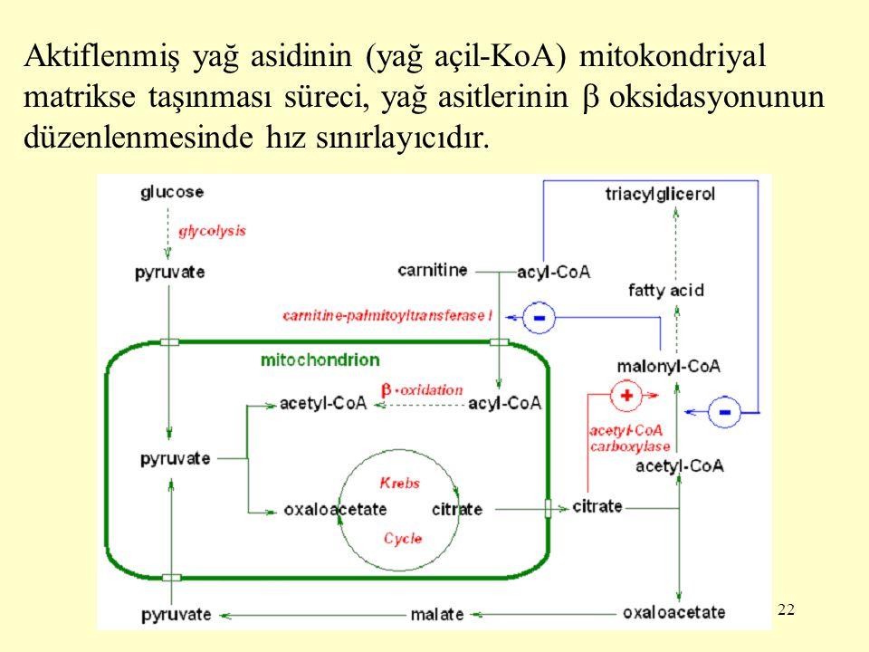 Aktiflenmiş yağ asidinin (yağ açil-KoA) mitokondriyal matrikse taşınması süreci, yağ asitlerinin  oksidasyonunun düzenlenmesinde hız sınırlayıcıdır.