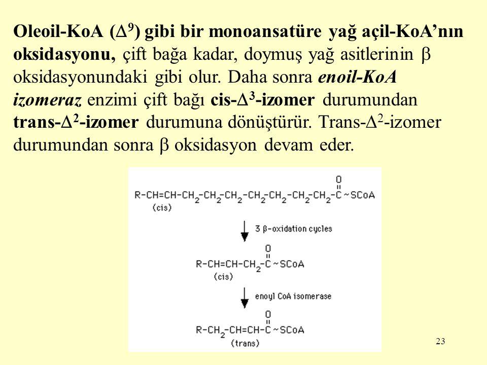Oleoil-KoA (9) gibi bir monoansatüre yağ açil-KoA'nın oksidasyonu, çift bağa kadar, doymuş yağ asitlerinin  oksidasyonundaki gibi olur.