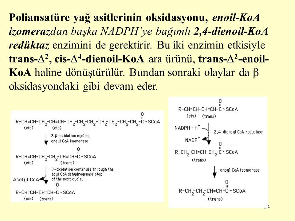 Poliansatüre yağ asitlerinin oksidasyonu, enoil-KoA izomerazdan başka NADPH'ye bağımlı 2,4-dienoil-KoA redüktaz enzimini de gerektirir.
