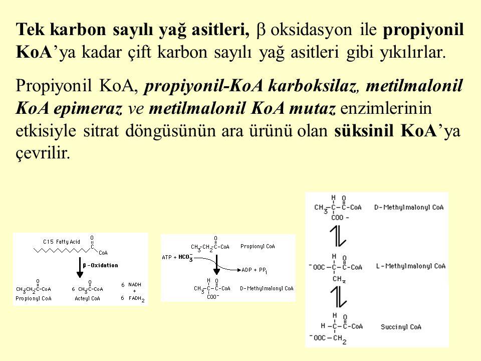 Tek karbon sayılı yağ asitleri,  oksidasyon ile propiyonil KoA'ya kadar çift karbon sayılı yağ asitleri gibi yıkılırlar.