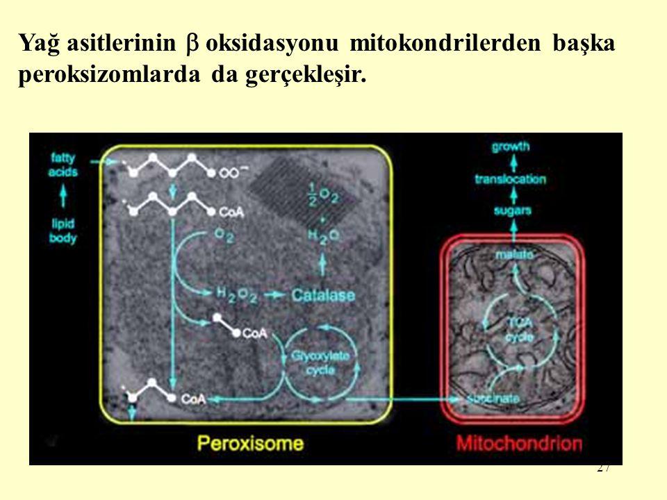 Yağ asitlerinin  oksidasyonu mitokondrilerden başka peroksizomlarda da gerçekleşir.
