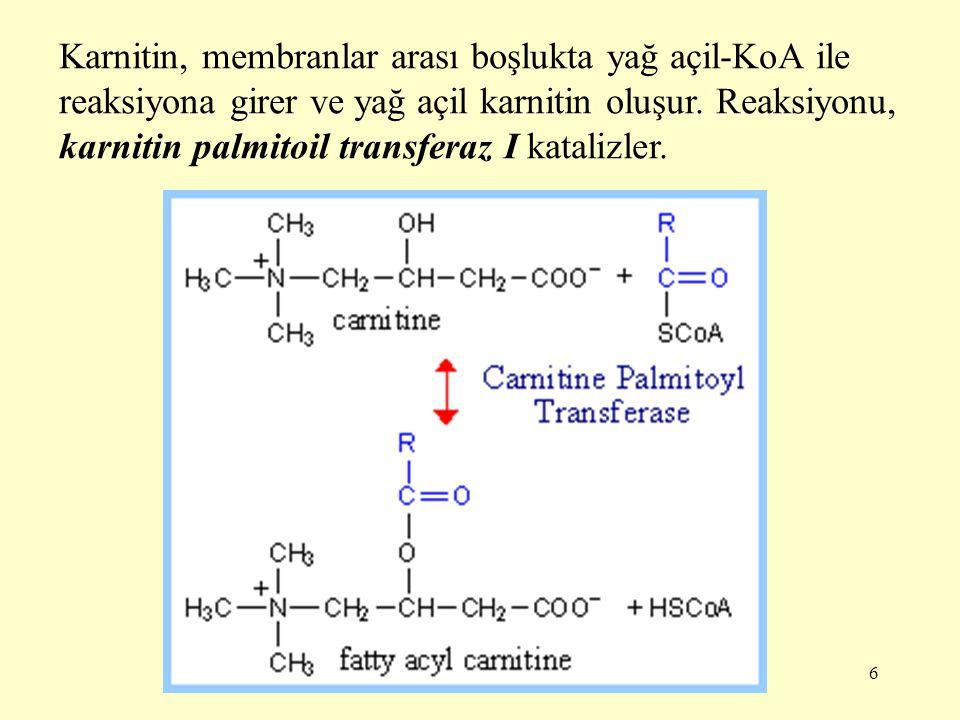 Karnitin, membranlar arası boşlukta yağ açil-KoA ile reaksiyona girer ve yağ açil karnitin oluşur.