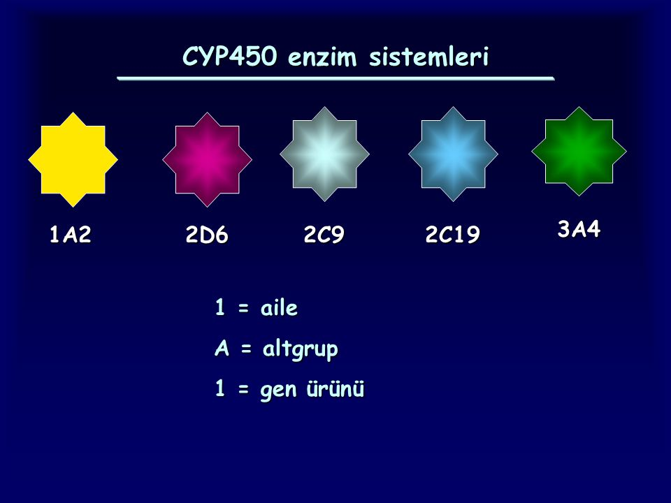 CYP450 enzim sistemleri 3A4 1A2 2D6 2C9 2C19 1 = aile A = altgrup