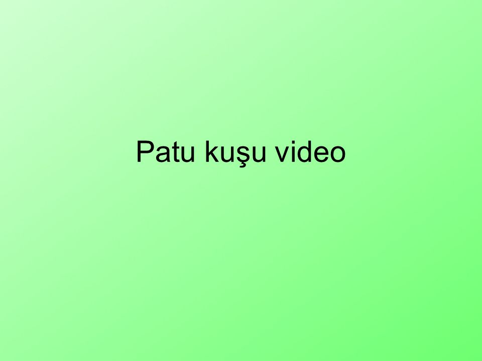 Patu kuşu video