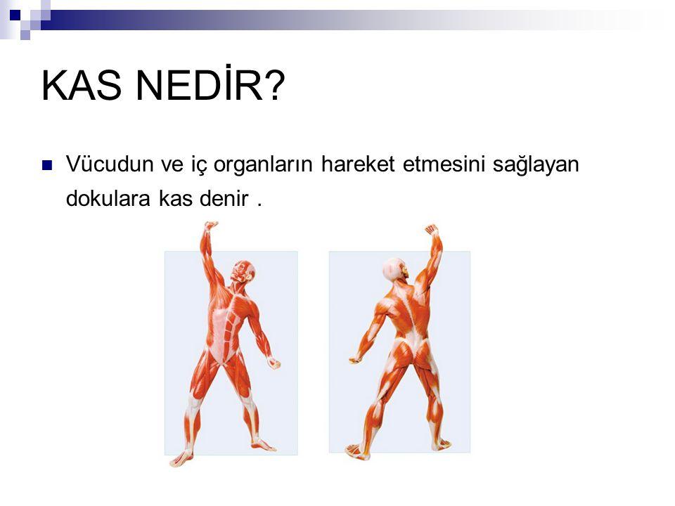 KAS NEDİR Vücudun ve iç organların hareket etmesini sağlayan dokulara kas denir .