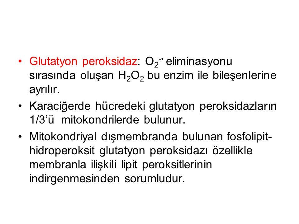 Glutatyon peroksidaz: O2-• eliminasyonu sırasında oluşan H2O2 bu enzim ile bileşenlerine ayrılır.