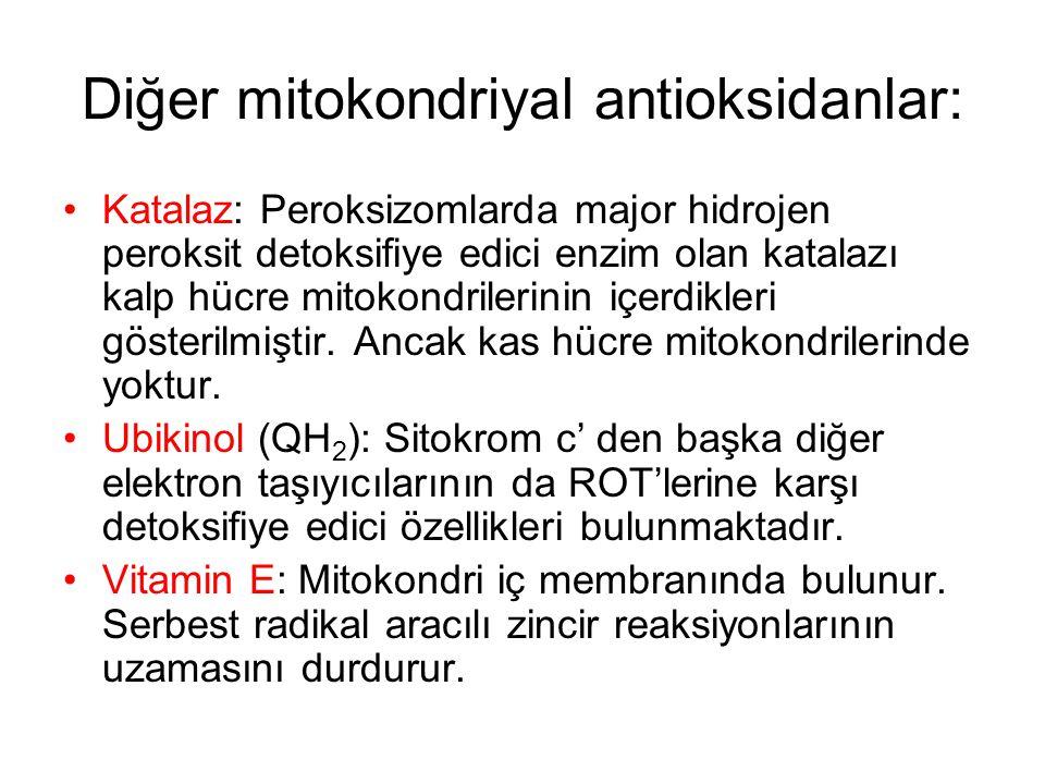 Diğer mitokondriyal antioksidanlar: