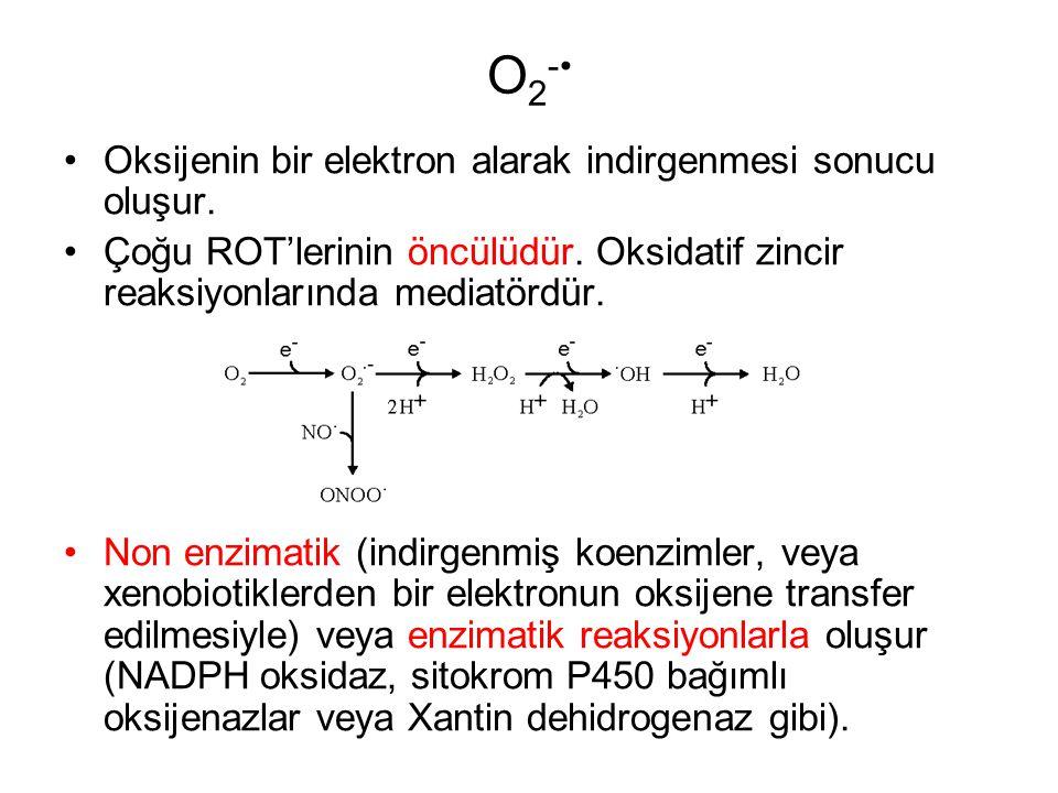 O2-• Oksijenin bir elektron alarak indirgenmesi sonucu oluşur.