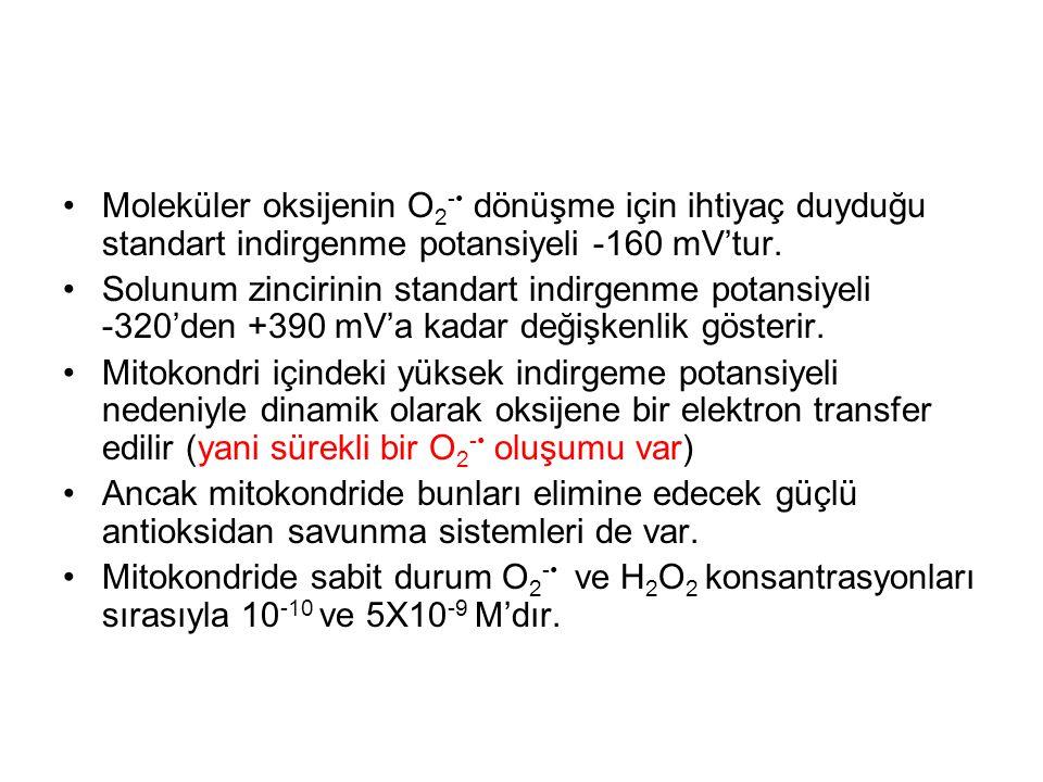 Moleküler oksijenin O2-• dönüşme için ihtiyaç duyduğu standart indirgenme potansiyeli -160 mV'tur.