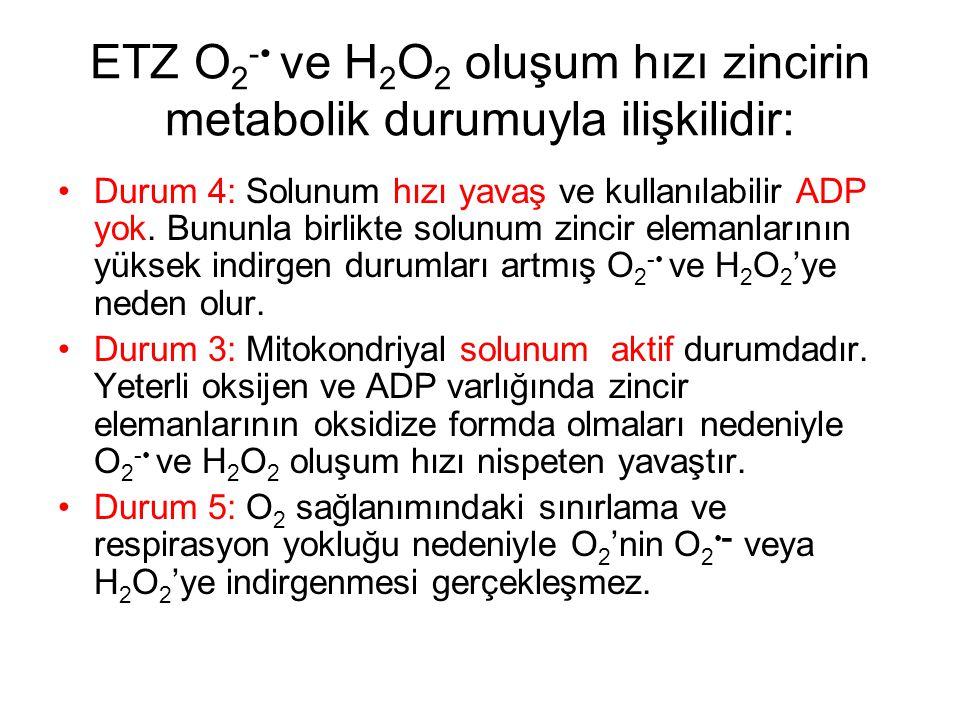 ETZ O2-• ve H2O2 oluşum hızı zincirin metabolik durumuyla ilişkilidir: