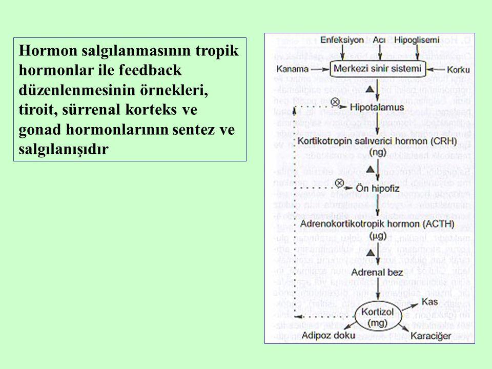 Hormon salgılanmasının tropik hormonlar ile feedback düzenlenmesinin örnekleri, tiroit, sürrenal korteks ve gonad hormonlarının sentez ve salgılanışıdır