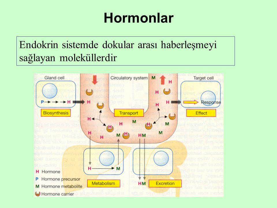 Hormonlar Endokrin sistemde dokular arası haberleşmeyi sağlayan moleküllerdir
