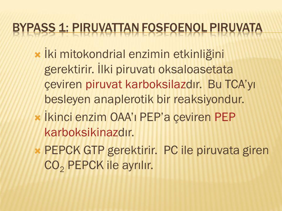 Bypass 1: Piruvattan Fosfoenol Piruvata