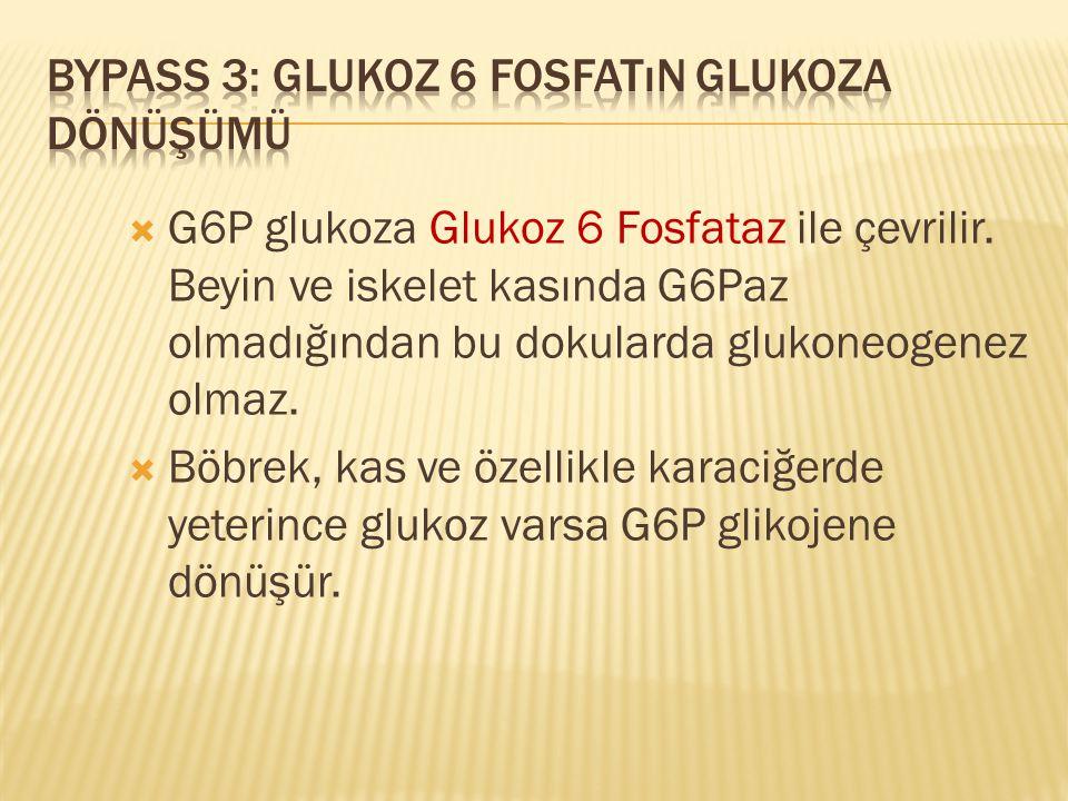 Bypass 3: Glukoz 6 Fosfatın Glukoza Dönüşümü