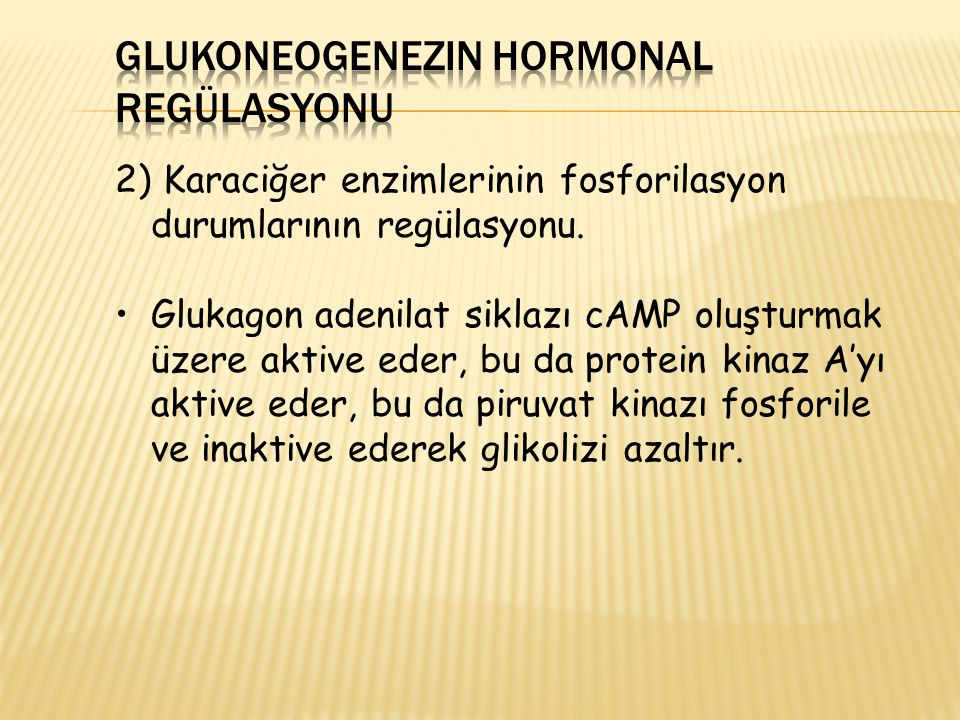 Glukoneogenezin Hormonal Regülasyonu