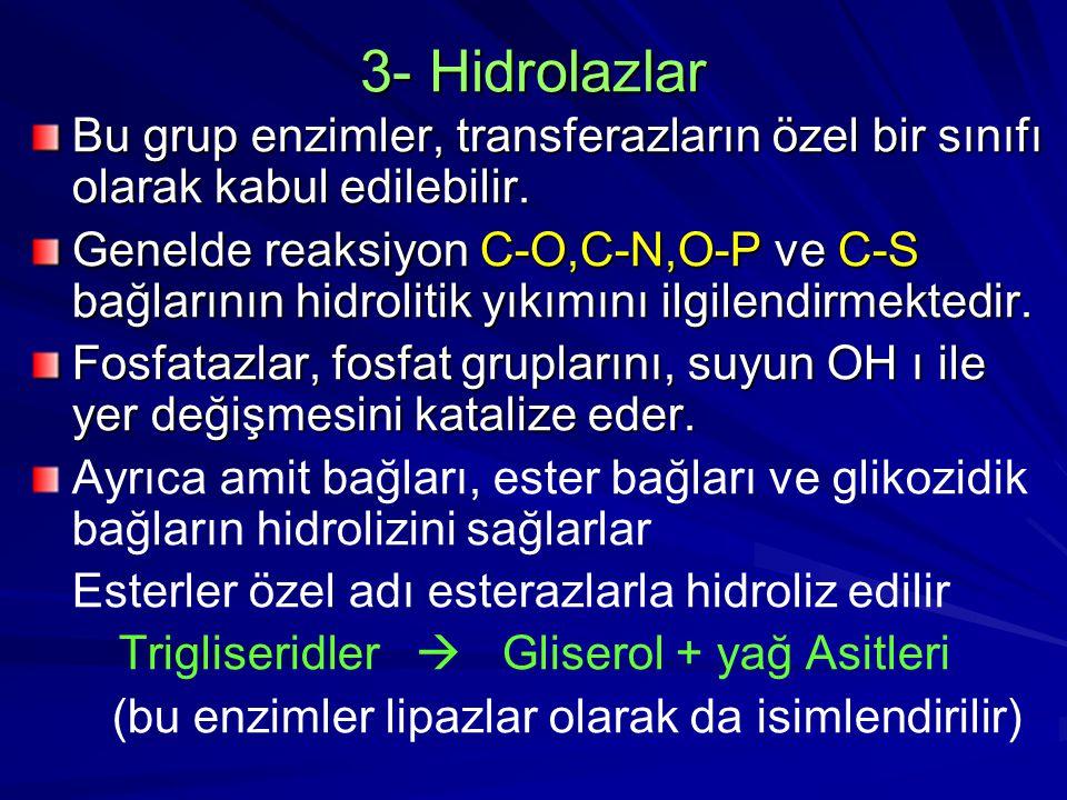 3- Hidrolazlar Bu grup enzimler, transferazların özel bir sınıfı olarak kabul edilebilir.