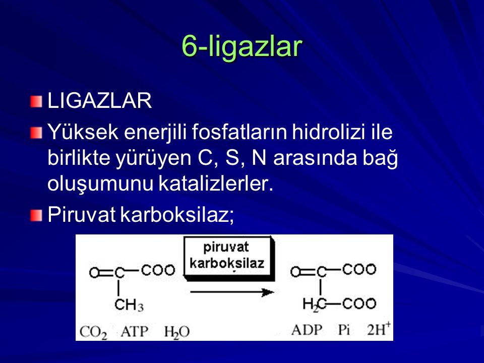 6-ligazlar LIGAZLAR. Yüksek enerjili fosfatların hidrolizi ile birlikte yürüyen C, S, N arasında bağ oluşumunu katalizlerler.