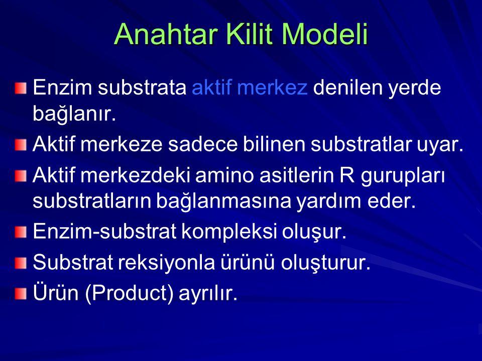 Anahtar Kilit Modeli Enzim substrata aktif merkez denilen yerde bağlanır. Aktif merkeze sadece bilinen substratlar uyar.