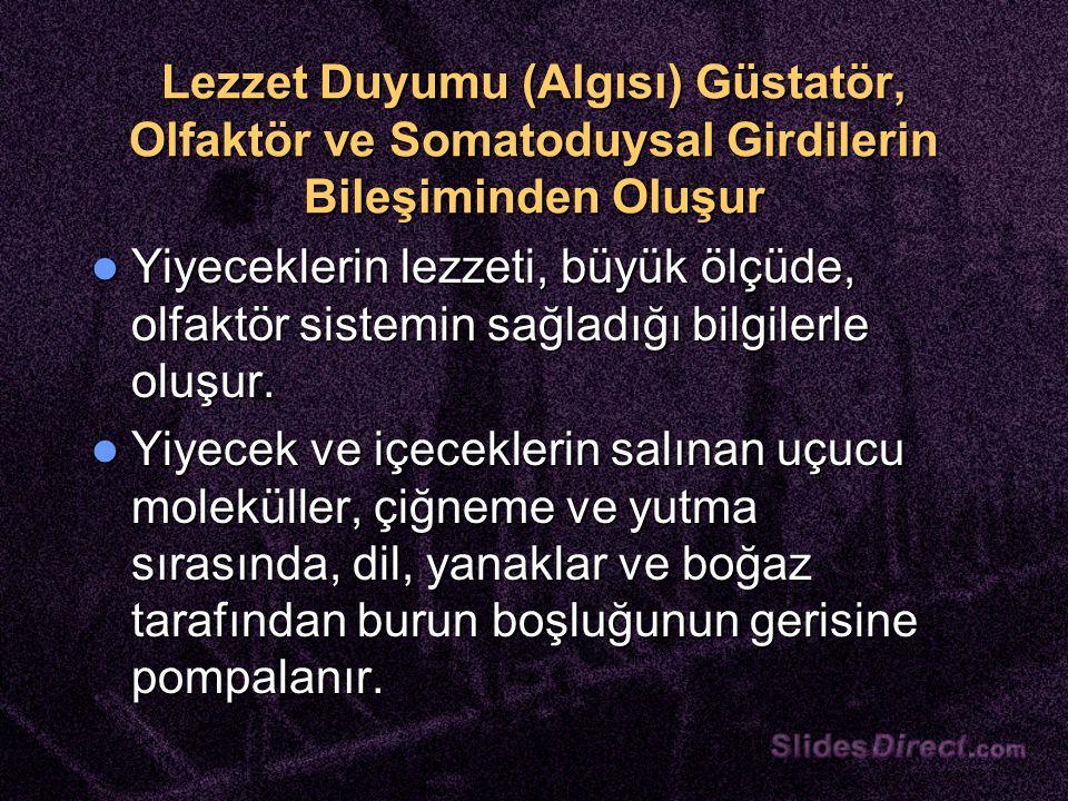 Lezzet Duyumu (Algısı) Güstatör, Olfaktör ve Somatoduysal Girdilerin Bileşiminden Oluşur