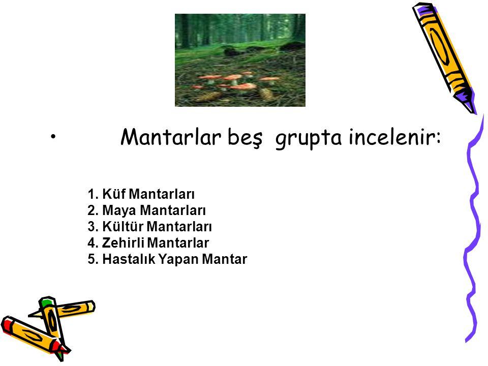 Mantarlar beş grupta incelenir: