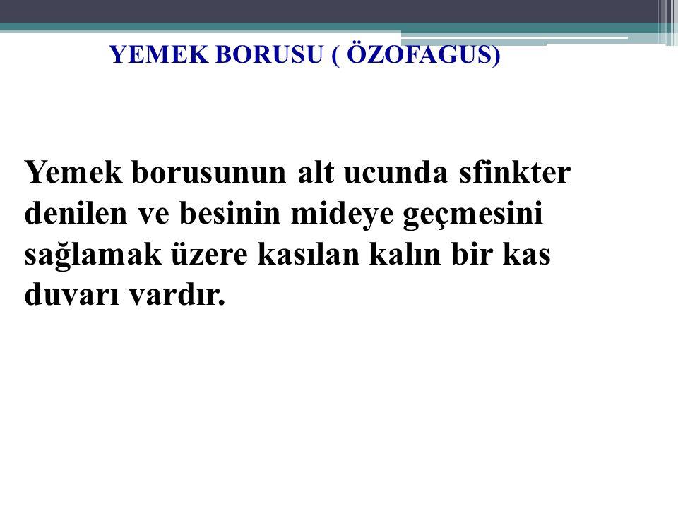 YEMEK BORUSU ( ÖZOFAGUS)