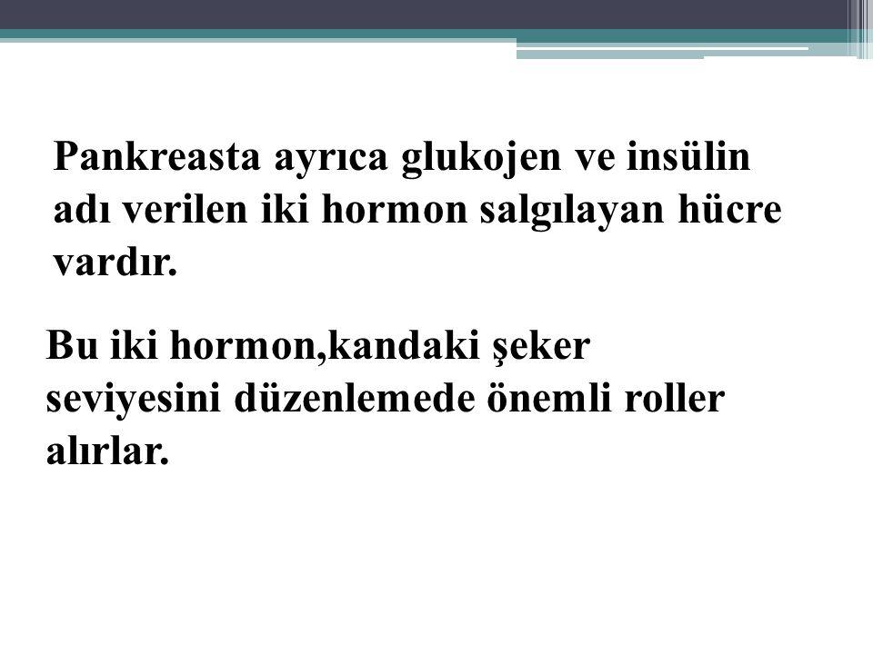 Pankreasta ayrıca glukojen ve insülin adı verilen iki hormon salgılayan hücre vardır.