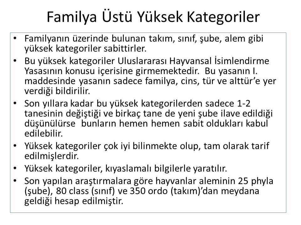 Familya Üstü Yüksek Kategoriler