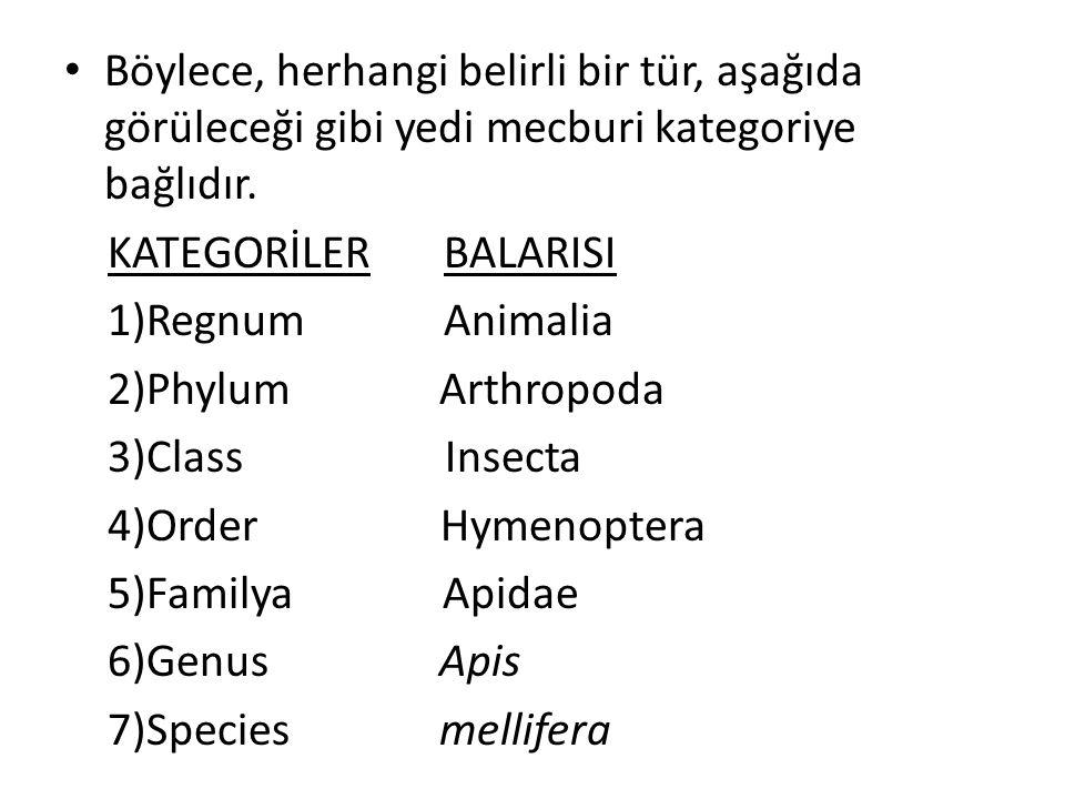 Böylece, herhangi belirli bir tür, aşağıda görüleceği gibi yedi mecburi kategoriye bağlıdır.