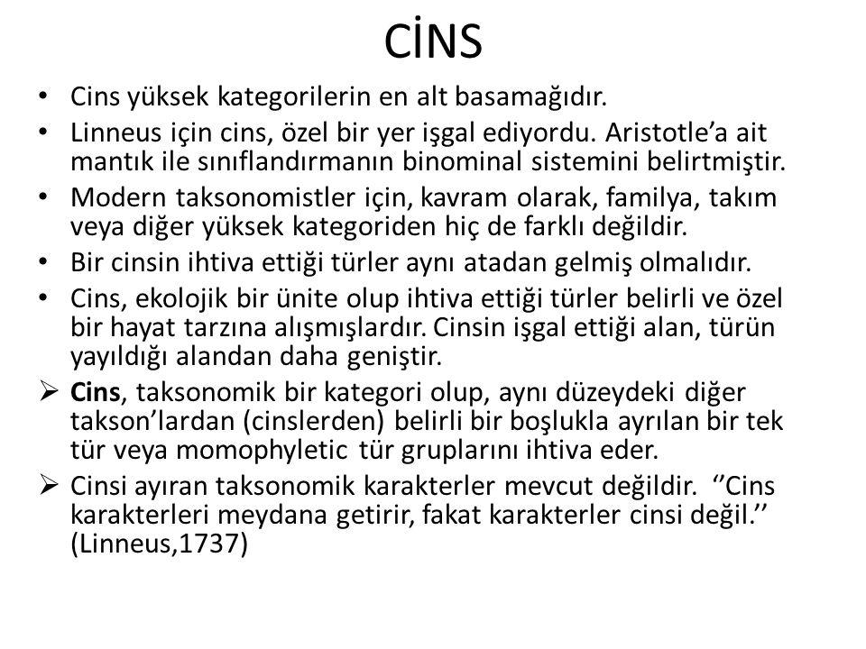 CİNS Cins yüksek kategorilerin en alt basamağıdır.