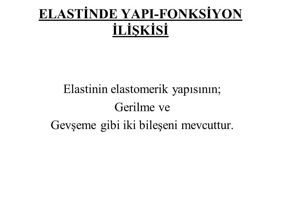 ELASTİNDE YAPI-FONKSİYON İLİŞKİSİ