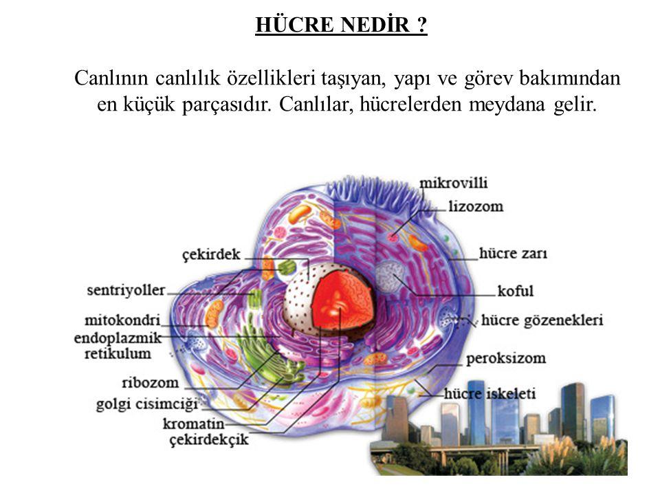 HÜCRE NEDİR . Canlının canlılık özellikleri taşıyan, yapı ve görev bakımından en küçük parçasıdır.